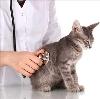 Ветеринарные клиники в Болони